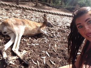 australia kangeroos